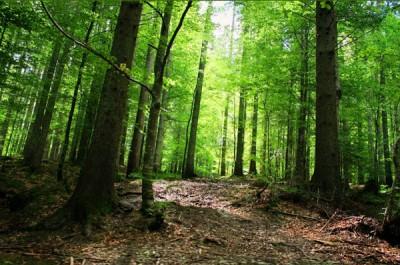 Седмица на гората и дейности на Туристическо Дружество Сърнена гора